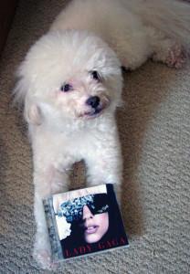 Ringo + Gaga 003