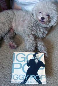 Ringo + Iggy 001