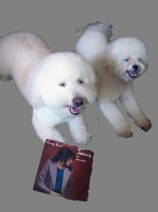 doggies + Carly 2014-06-25 14.31