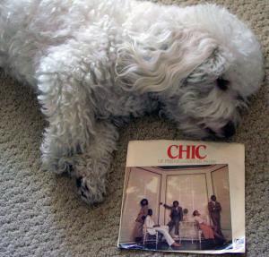 Winston + Chic 2014-09-19 13.37