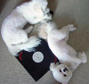 doggies + New Edition