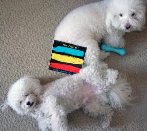doggies + Police