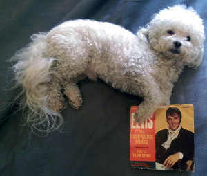 Ringo + Elvis