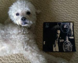 Ringo + Dead or Alive